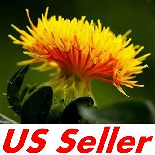 AGROBITS 50 P de cártamo Carthamus azafrán Tinctorius Semillas B66, vendedor de los EEUU