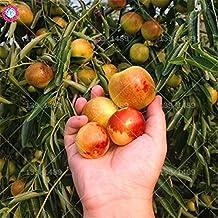 30Pcs Winter Jujube Seeds Organic Sweet Fruit Natural Date Palmseedsing for DIY Home Garden Seeds