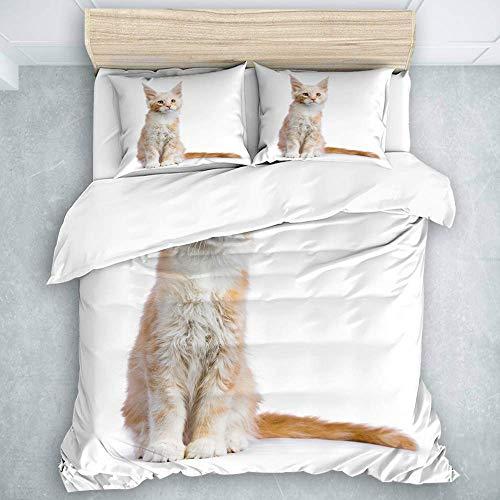 Set copripiumino, gattino gatto Maine Coon rosso argento seduto isolato, 1 copripiumino + 2 fodere per cuscini 3 pezzi