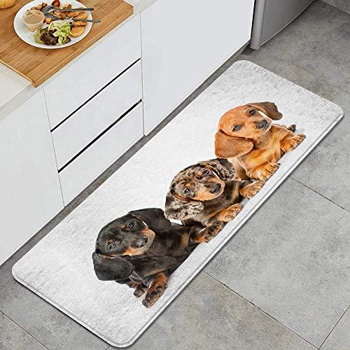 ZORMIEY Tappetini da Cucina Antiscivolo,Gruppo di Cuccioli di Bassotto sdraiato Insieme,Passatoia per la Cucina Durevole, Facilmente Lavabile,Tappeto Bagno,45x120 cm