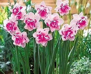 Bloom Green Co. Bonsai 100 unids/pack Flor de Narciso (no Bulbos de Narciso) Flor de Bonsai Plantas Acuáticas Pétalos Dobles Planta de Jardín de Hogar