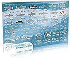 VAULTERIUS Angler Fischposter zum Rubbeln mit europäischen