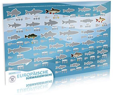 VAULTERIUS Angler Fischposter zum Rubbeln mit europäischen Süßwasserfischen
