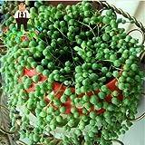 Pinkdose Perla Chlorophytum plantas suculentas plantas bonsai Cuentas Senecio rowleyanus Plantas en maceta contra la radiación 200 partículas/porción