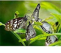 ダイヤモンド塗装キット、花蝶、大人の子供のための5Dダイヤモンド絵画アート、家の壁の装飾のためのキャンバスパターンクロスステッチ刺繡工芸品40X50CM