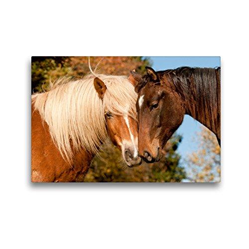 CALVENDO Premium Textil-Leinwand 45 x 30 cm Quer-Format Sonnige Tage auf der Weide, Leinwanddruck von Meike Bölts