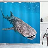 Alvaradod Meerestiere Duschvorhang,Walhai Schwimmen Raubtiere Jäger Klares Wasser unter dem Meer Bilddruck,Stoff Stoff Badezimmer Dekor Set mit,Blaugrau mit 12 Kunststoffhaken 180x210cm