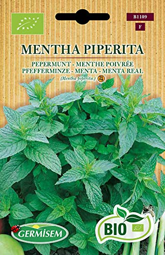 Germisem Pfefferminze MENTHA PIPERITA, ECBIO1109