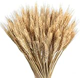 Msrlassn Pasto de Trigo seco Flores Ramo secas de Trigo Artificial Natural para Chimenea Hogar Cocina Iglesia Mesa Decoración de Boda (marrón,40 cm)
