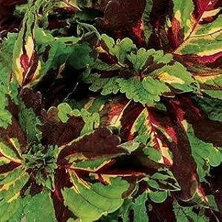 Outsidepride Coleus Kong Mosaic - 20 Seeds