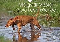 Magyar Vizsla - pure Lebensfreude (Wandkalender 2021 DIN A4 quer): Hunderassenkalender Magyar Vizsla mit 13 schnen Fotos (Monatskalender, 14 Seiten )