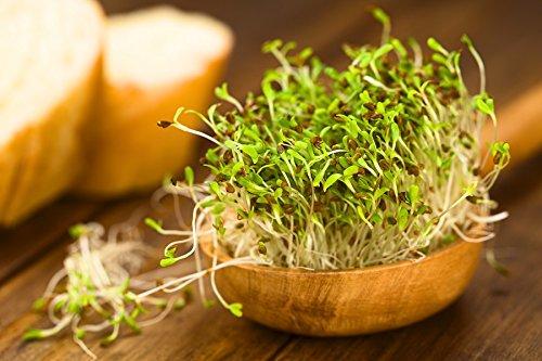 BIO - germes de germes de luzerne - semences certifiées biologiques; - graines