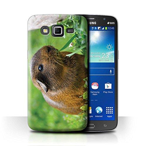 eSwish Carcasa/Funda Dura para el Samsung Galaxy Grand 2/G7102 / Serie: Lindos Animales de Compañía - Conejillo de Indias