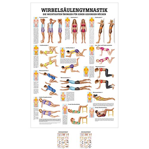 Sport-Tec Wirbelsäulengymnastik Mini-Poster Anatomie 34x24 cm medizinische Lehrmittel