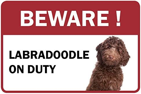 Labradoodle Ranking TOP3 Beware Gifts Business Store Sign Counter Retail