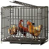 miglior pollaio per galline recensione prezzi top di gamma
