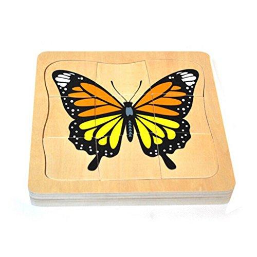Pixnor pédagogique de bois Butterfly wachsenden processus Puzzle