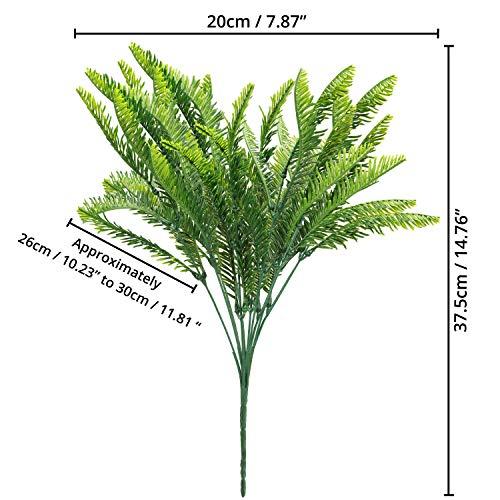 BELLE VOUS Plantas