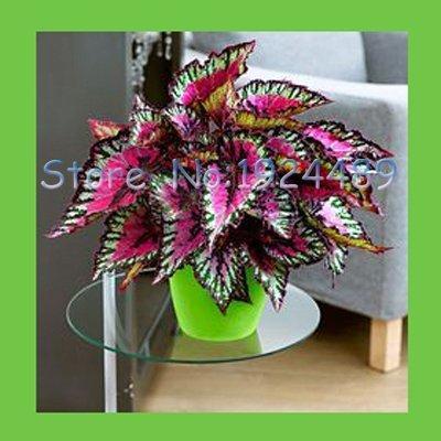 planta wasabi de la marca Ms Agro