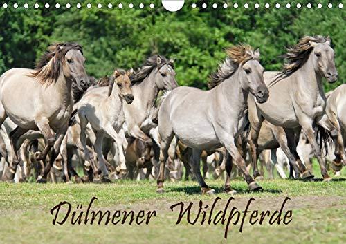 Dülmener Wildpferde (Wandkalender 2021 DIN A4 quer)
