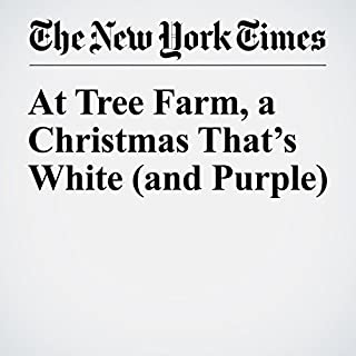 At Tree Farm, a Christmas That's White (and Purple) cover art