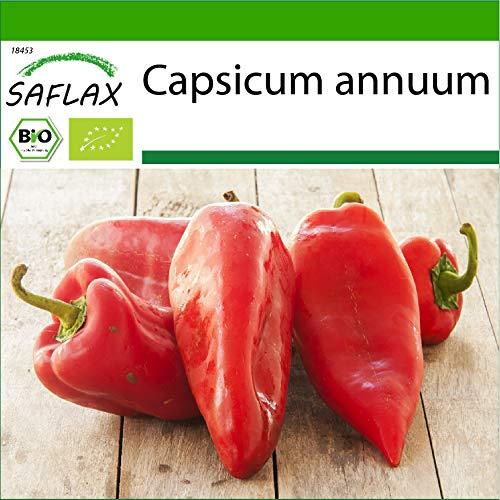 SAFLAX - BIO - Poivron - Red Marconi - 20 graines - Avec substrat de culture aseptique - Capsicum annuum