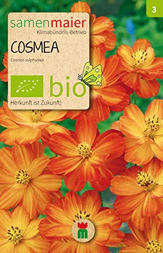 BIO Cosmea, orange (Cosmos sulphureus)
