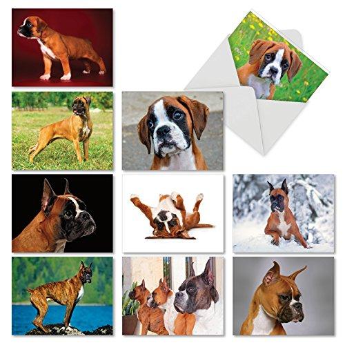 Best Boxer: 10sortiert blanko Karten alle Anlässe Bright, Lebenslustig und Active Boxershorts sind immer Loving, mit Umschläge. am6295ocb-b1X 10