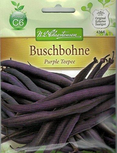 Chrestensen Buschbohne 'Purple Teepee' Gluckentyp Saatgut