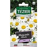 bolsa de semillas Margarita Blanca - Tezier