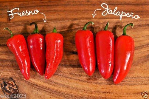 30 Fresno Chili Pepper Samen (organisch) Ähnlich wie die Jalapeno, aber viel Hotter