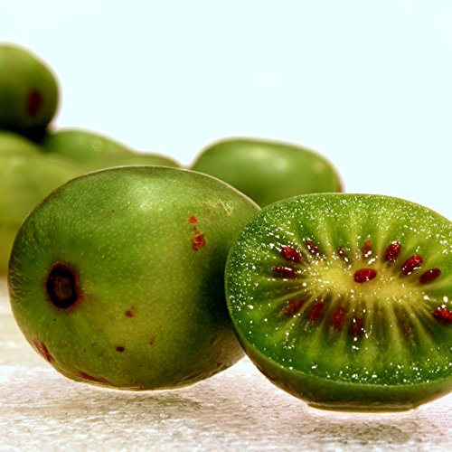 Hardy Kiwi Seeds (Actinidia arguta) 20+ Rare Cold-Tolerant Tropical Fruit Seeds in FROZEN SEED CAPSULES for the Gardener & Rare Seeds Collector - Plant Seeds Now or Save Seeds for Years