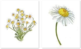 Gerber daisy art #A038 - set of 2 prints(8x10).Gerber daisy wall art.Daisy art.Daisy wall art.Gerber daisy painting.Gerber daisy pictures.White flowers wall decor