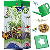 Heidi STEM Terrarium Kit for Kids and Adults Mini Vegetable Garden Microgreen Indoor Planting Kit Activities Biology Life Science Gift with LED Light