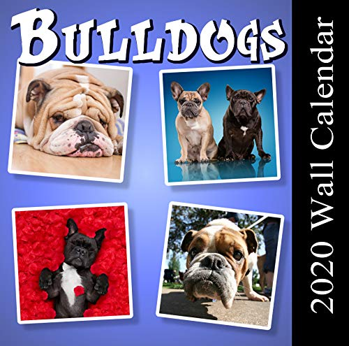 2020 Bulldogs Wall Calendar, Deluxe 12 x 12 Inch Monthly Full Color Photo Featuring French Bulldogs and English Bulldogs