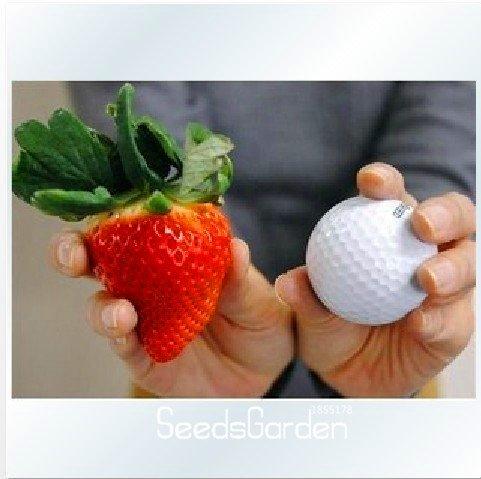 Big Promotion! 50 PCS / Sac Graines de légumes bonsaï graines de fraises de fraise comestible quatre saisons gros caractères grand goût sucré, # GTGG