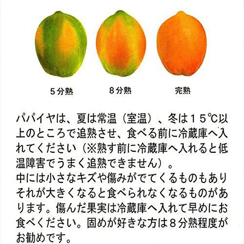 沖縄旬青果『沖縄産フルーツパパイヤ4kg石垣珊瑚パパイヤ』