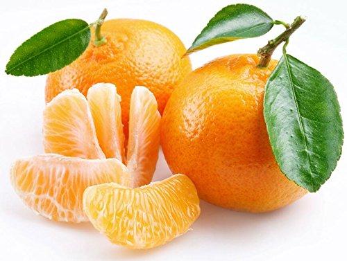 Golden Delicious orange semences Mini Potted arbres fruitiers Graines Bonsai Intéressant planter 50 particules/lot 3