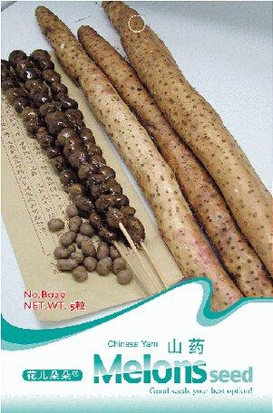 Graines Dioscorea Polystachya chinois Yam, emballage d'origine, 5 Graines / Pack, Tasty légumes biologiques à base de plantes Graines # B029