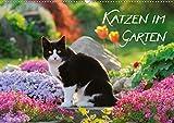 Katzen im Garten (Wandkalender 2021 DIN A2 quer)