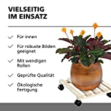 Pflanzenroller Test