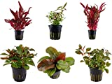 Tropica Pflanzen Set 6 schöne rote Topf Pflanzen Aquariumpflanzenset...