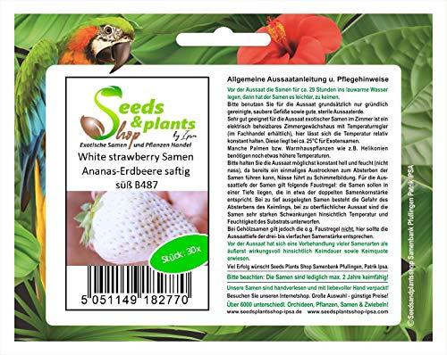 Piezas - 30x Blanco Strawberry Piña Fresas Jugoso Dulce Plantas - Semilla B487 - Seeds Plants Shop Samenbank Pfullingen Patrik Ipsa