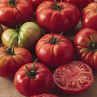 Best champion tomato seeds Reviews