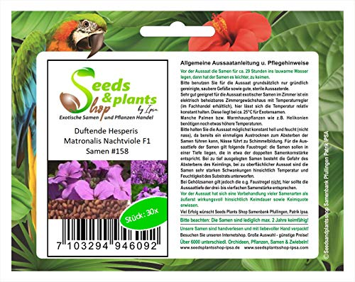 Stk - 30x Duftende Hesperis Matronalis Nachtviole F1 Pflanzen - Samen #158 - Seeds Plants Shop Samenbank Pfullingen Patrik Ipsa