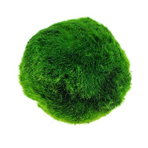 ypypiaol 3-4 Cm Piccolo Marimo Moss Ball Acquario Naturale Pianta Fish Tank Ornament Decor Verde