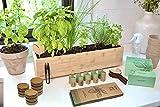 FLEUR DU BIEN Kit de cultivo hierbas aromaticas con maceta, mini huerto urbano etiquetas, macetas de cultivo, discos de tierra,10 tipos de semillas hierbas, regalo de jardinería