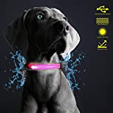Hunter Paisley Premium Waterproof LED Dog Collar for Dogs USB Magnetic Rechargeable and Reflective for Safety at Night - Red, Pink, Blue, Yellow
