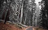 Rompecabezas Para Adultos 1000 Piezas Paisaje Árboles Camino Forestal Montaje De Madera Decoración Para El Hogar Juego De Juguetes Juguete Educativo Para Niños Y Adultos