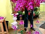 Petal Pushers - Season 1, Episode 9 - Funky Flowers